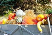 Still life of pumpkins on cart — Stock Photo
