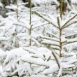 winter bomen — Stockfoto #6609615