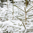 winter bäume — Stockfoto