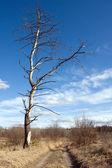 Old tree — Stockfoto