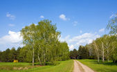 Rural road in forest — Stockfoto