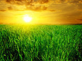 Majestic sunset over green field — Stock Photo