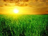 绿色的原野雄伟日落 — 图库照片
