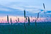 Noche en estepa — Foto de Stock