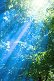 Blue rays in sunny forest — Stock Photo