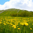 Stock Photo: Nice frlowers meadow