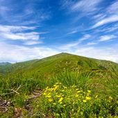 Summer scene in mountains — Stock Photo