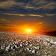 Sunset in stones desert — Stock Photo #6041894