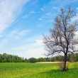 Stock Photo: Leafless tree on green meadow