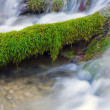 Green moss in water — Stock Photo #6598680