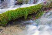 Verde musgo en agua — Foto de Stock
