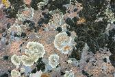 Stary tło kamień — Zdjęcie stockowe