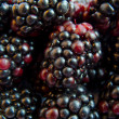 Macro image of blackberry — Stock Photo
