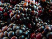 Macro image of blackberry — Stock Photo