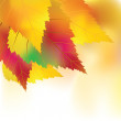 Stock Vector: Colorful autumn background
