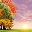 Wonderful autumn sunset — Stock Photo