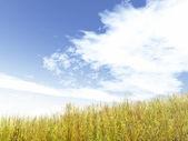 Beautiful landscape — Stockfoto