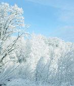 Beyaz kış — Stok fotoğraf
