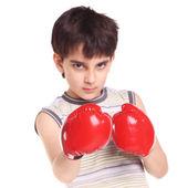 Mało przystojny bokser — Zdjęcie stockowe