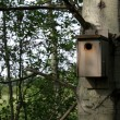 Birdhouse on a Tree — Stock Photo