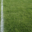 Green Grass and White Line — Stock Photo