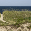 Stock Photo: North CarolinBeach Path