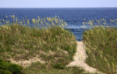 Path to the Beach — Stock Photo