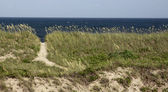 North Carolina Beach Path — Stock Photo