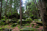 Pine tree forest with moss over rocks — Stock Photo
