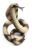 Rubber Cobra — Stock Photo