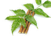 Medicinal neem leaves with twigs — Stock Photo
