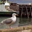 Sea Gull - Stockfoto