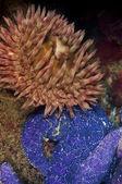 Underwater Fauna — Stock Photo