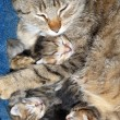 Cat with newborn kitten — Stock Photo #5560454