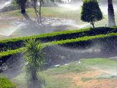 Watering a garden — Stock Photo