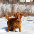 Dog in winter park — Stock fotografie