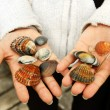 Sea Shells in hands — Stock Photo