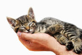 Kitty sleeping in arms — Stock Photo