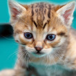 Adorable kitty — Stock Photo #6269159