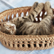 Adorable kitty sleeping in basket — Stock Photo