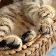 Paws in basket — Stock Photo