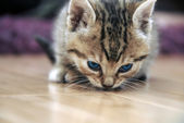 Baby cat sniff — Stock Photo