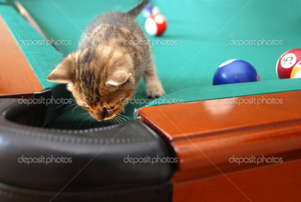 One curious little cat searching a billiards table — Stock Photo #6514386