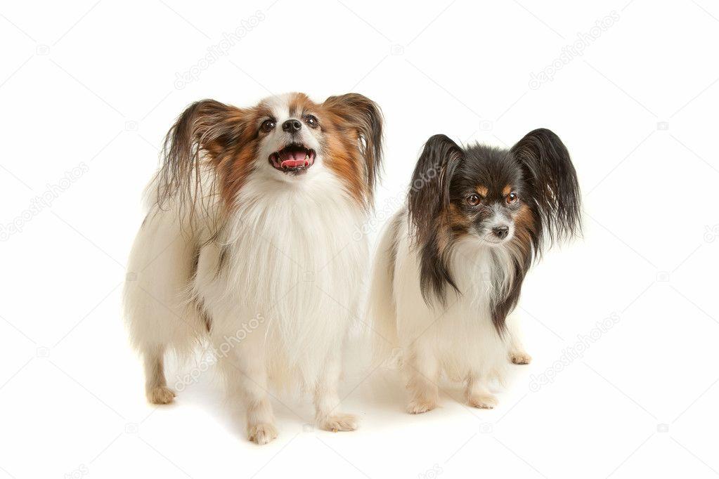 两个两个动物图片