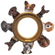 A group of dog portraits around a round golden picture frame — Stock Photo