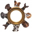 Stock Photo: Group of dog portraits around round golden picture frame