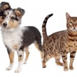Dog and cat — Stock Photo #6413791