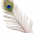 Detail of peacock feather eye - Stok fotoğraf