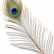 Stock Photo: Detail of peacock feather eye