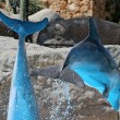 Leaping Blue Dolphins on a sunny day at an aquarium — Stock Photo